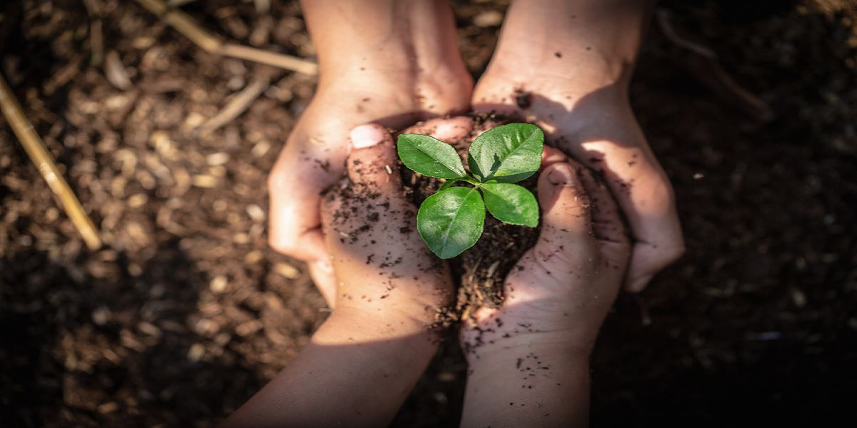 Seedling being held in a pair of small white hands, which are within the cradle of a pair of larger white hands. Soil in the background.