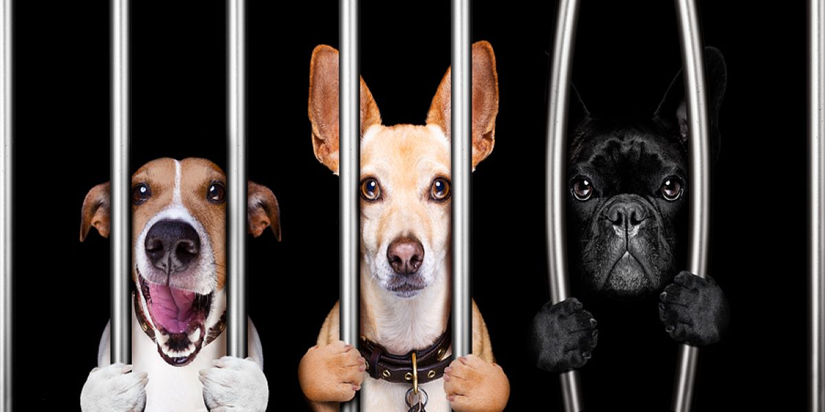 Photo of three different dogs behind bars with a black background. Illustrating the first furlough fraudsters have been arrested.