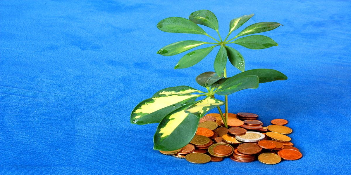 Photo of a pile of coins representing and island, with plant leaves secured in this, on a blue background. Illustrates the concept of places that are used as tax havens.